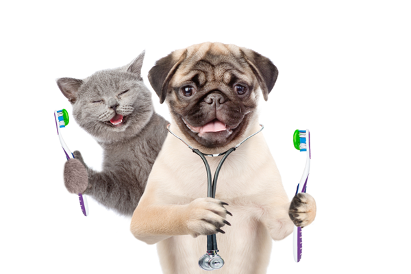 dog and cat holding a toothbrush