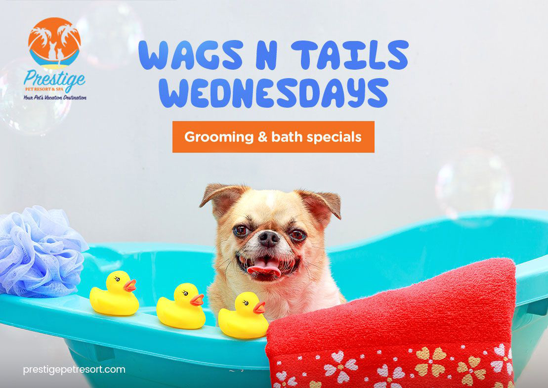 Summer Grooming Specials - Wags 'N' Tails Wednesdays