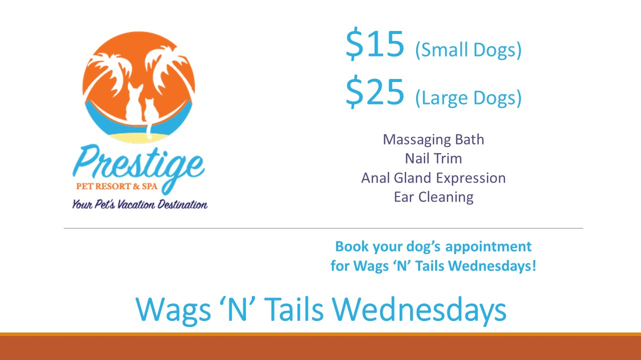 Wags N Tails Wednesdays at Prestige Pet Resort & Spa