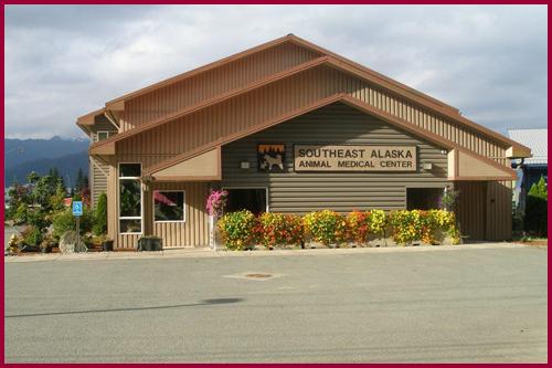 The original Southeast Alaska Animal Medical Center building was a charming dairy milk house.