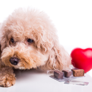 9 Things You Need to Know About Heartworm Disease