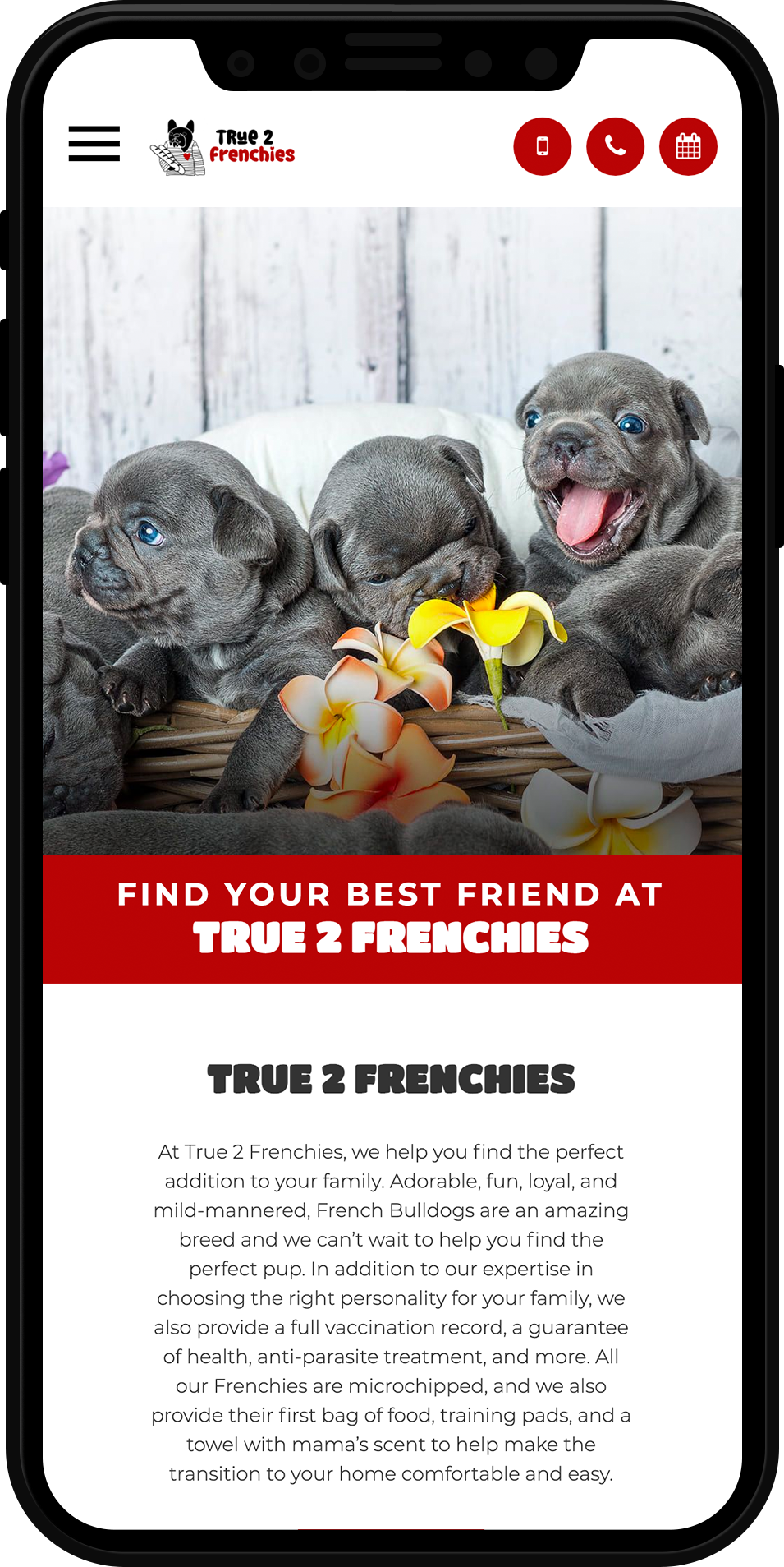 True 2 Frenchies