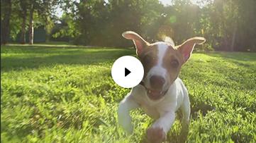 Terrier Running on Grass