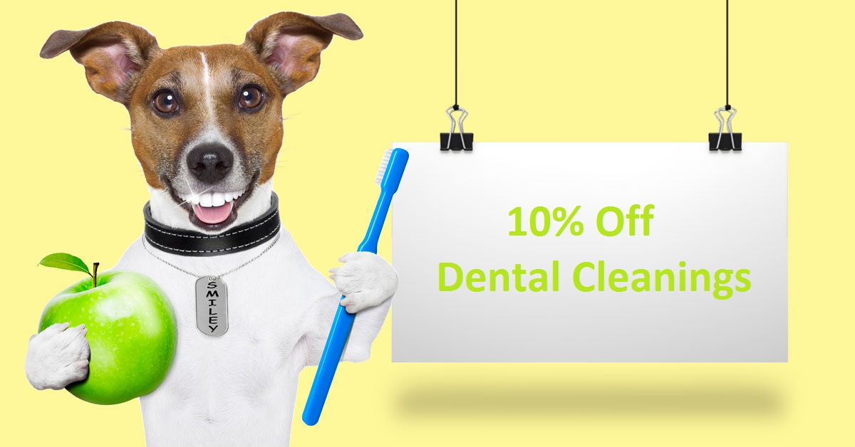 Save 10% on Dental Cleanings through Oct. 15