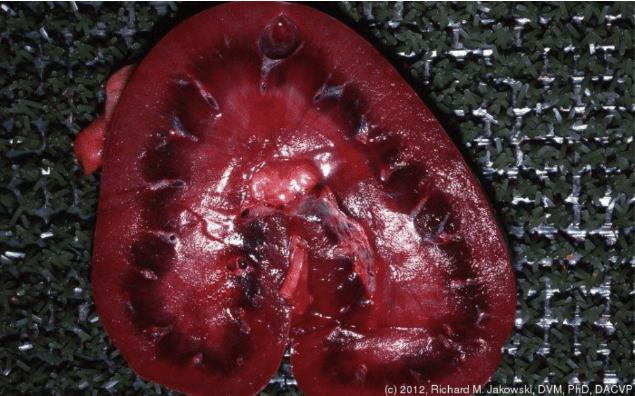 Chronic Kidney Disease in the Horse | Cave Creek AZ Equine Vet