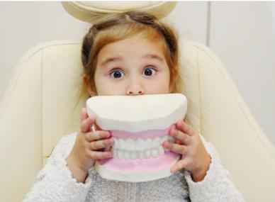 little girl holding teeth model