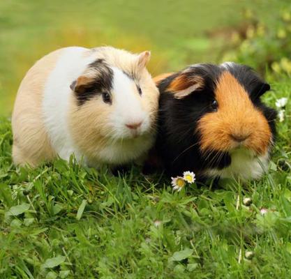 Veterinarians in Chula Vista CA | Amazon Animal Hospital