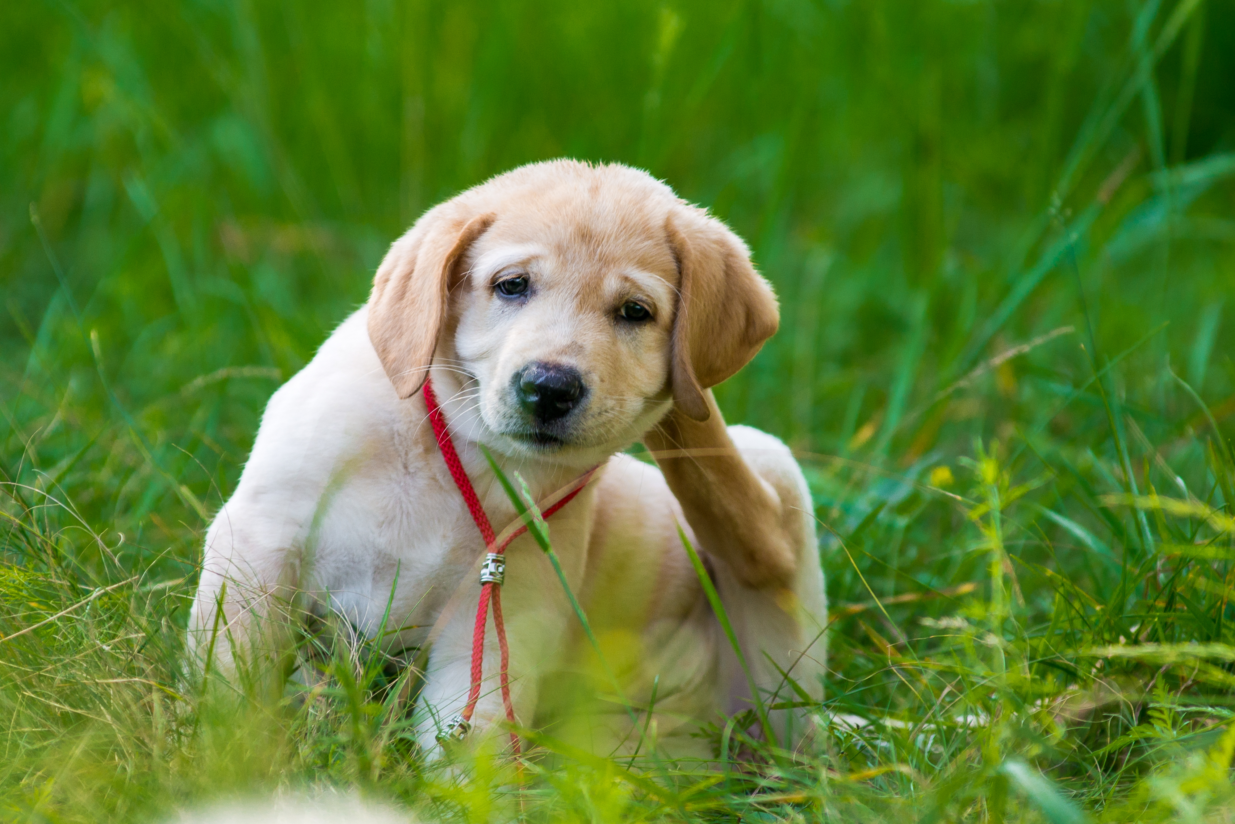 how to get rid of fleas on dogs noblesville pet wellness clinic