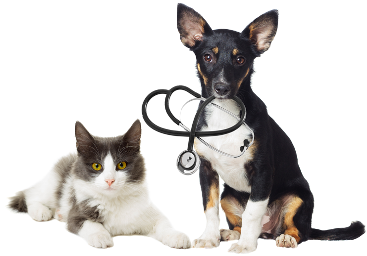 lying cat and a dog biting a stethoscope