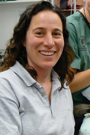 Dr. Amy Allen, DVM, Diplomate, ACVIM