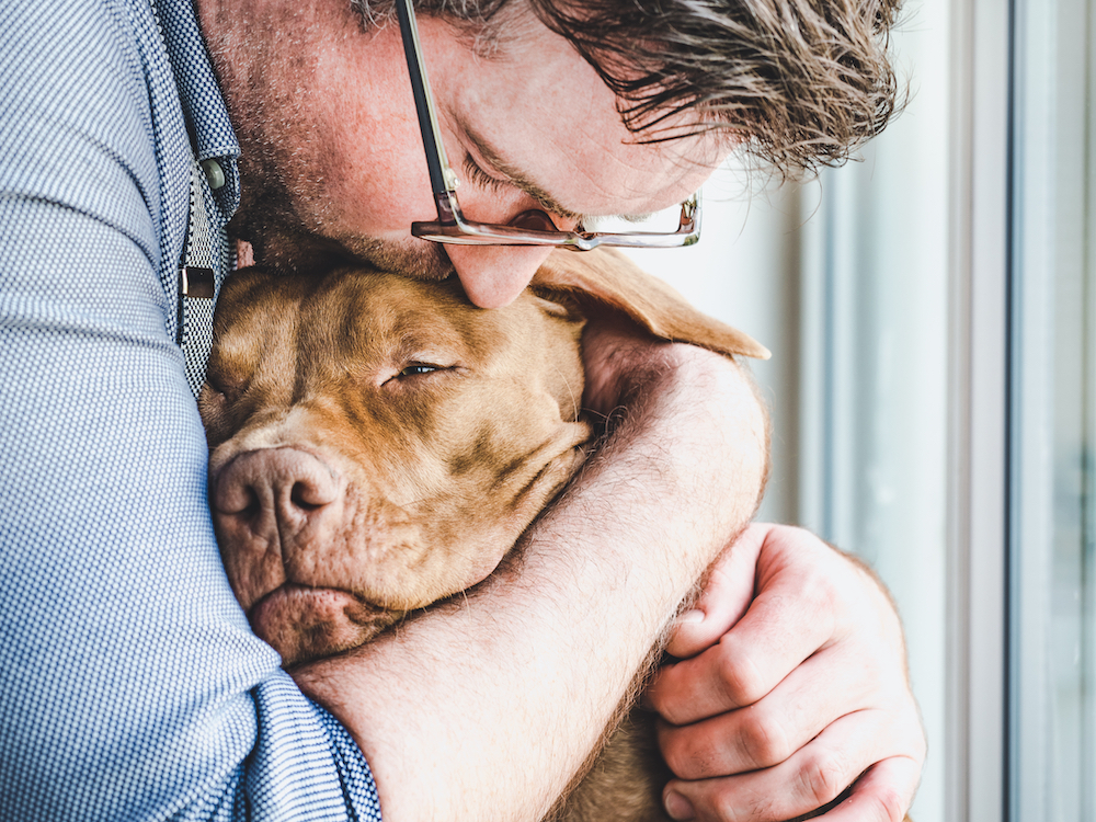 Common Pet Surgeries And Reasons Why Pets Might Need Them