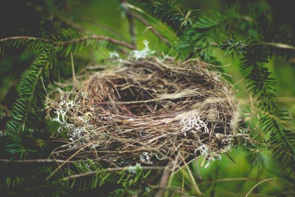 Empty Nest Syndrome...