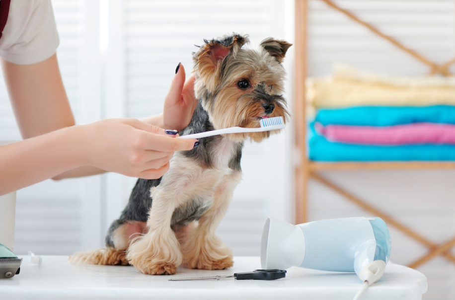 Pet Dentist in Fort Walton Beach