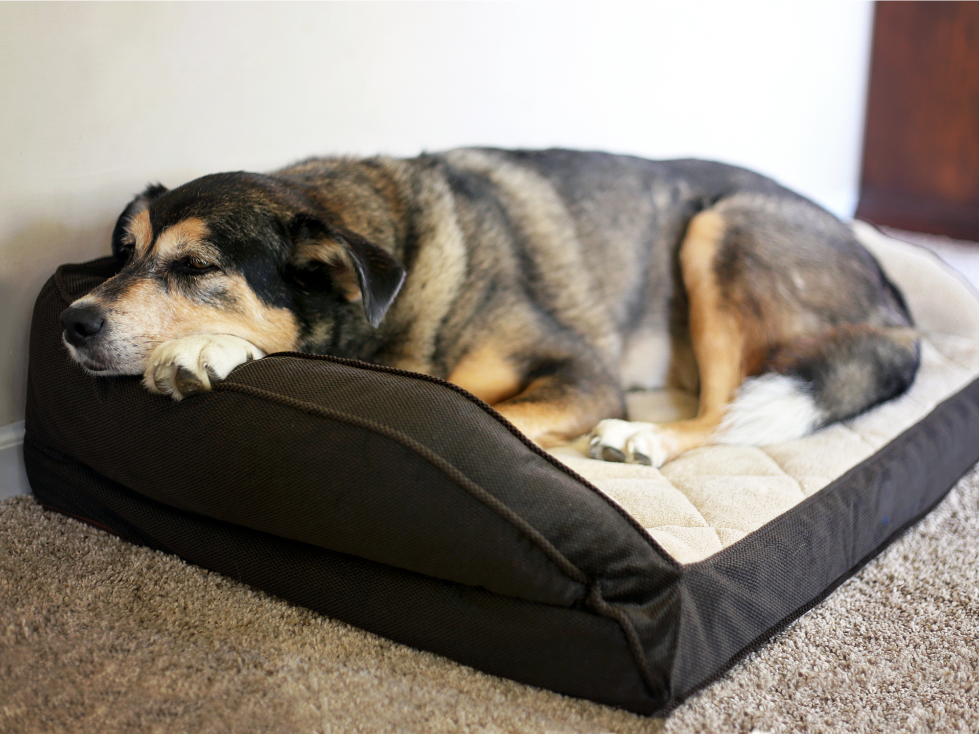 Does Weight Impact Arthritis in Pets?