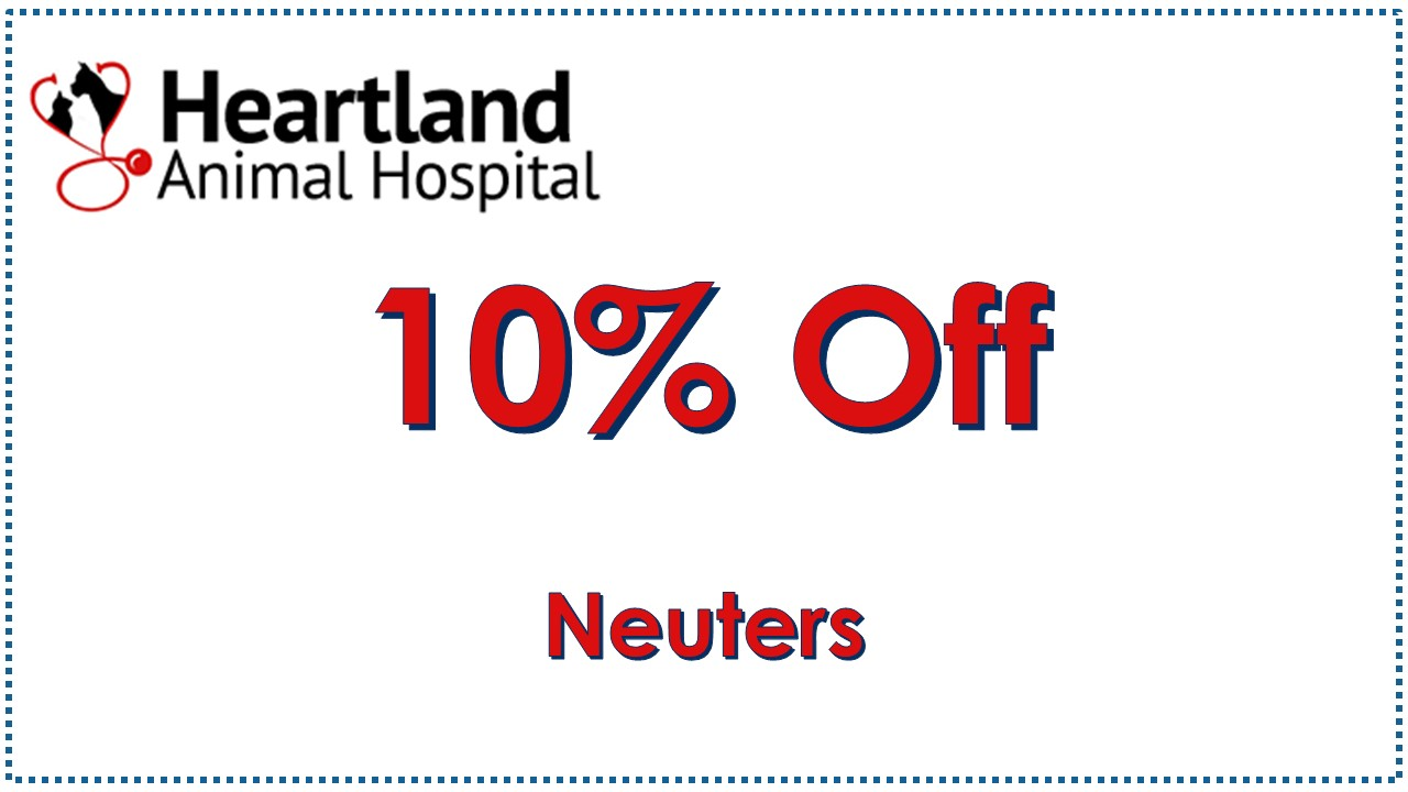 Save 10% on Pet Neuters in September