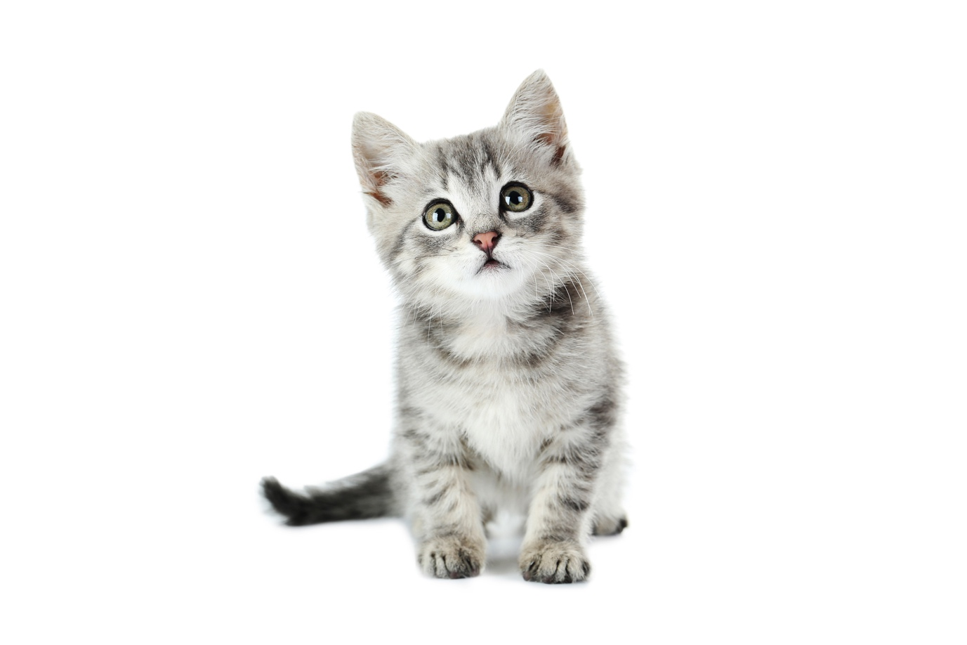 When Should I Microchip My Kitten Heartland Animal Hospital
