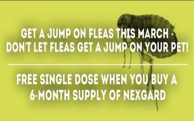 Save on Flea Prevention