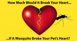 Save Money While Saving Your Pets Heart