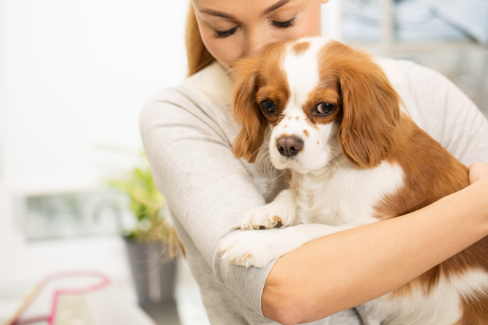 Vaccination Schedule for Puppies and Kittens
