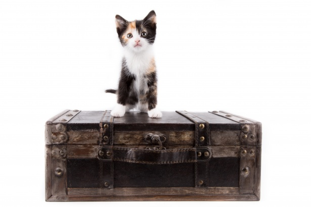 Leaving Cedar Park for Summer Travels?  Have Your Pets Board with Us