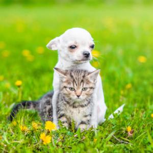 Puppies & Kittens
