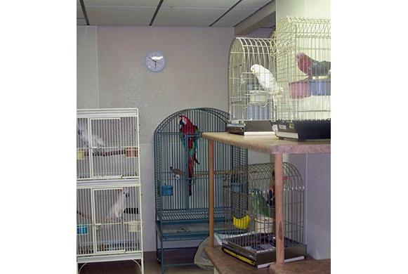 veterinary clinic in las vegas