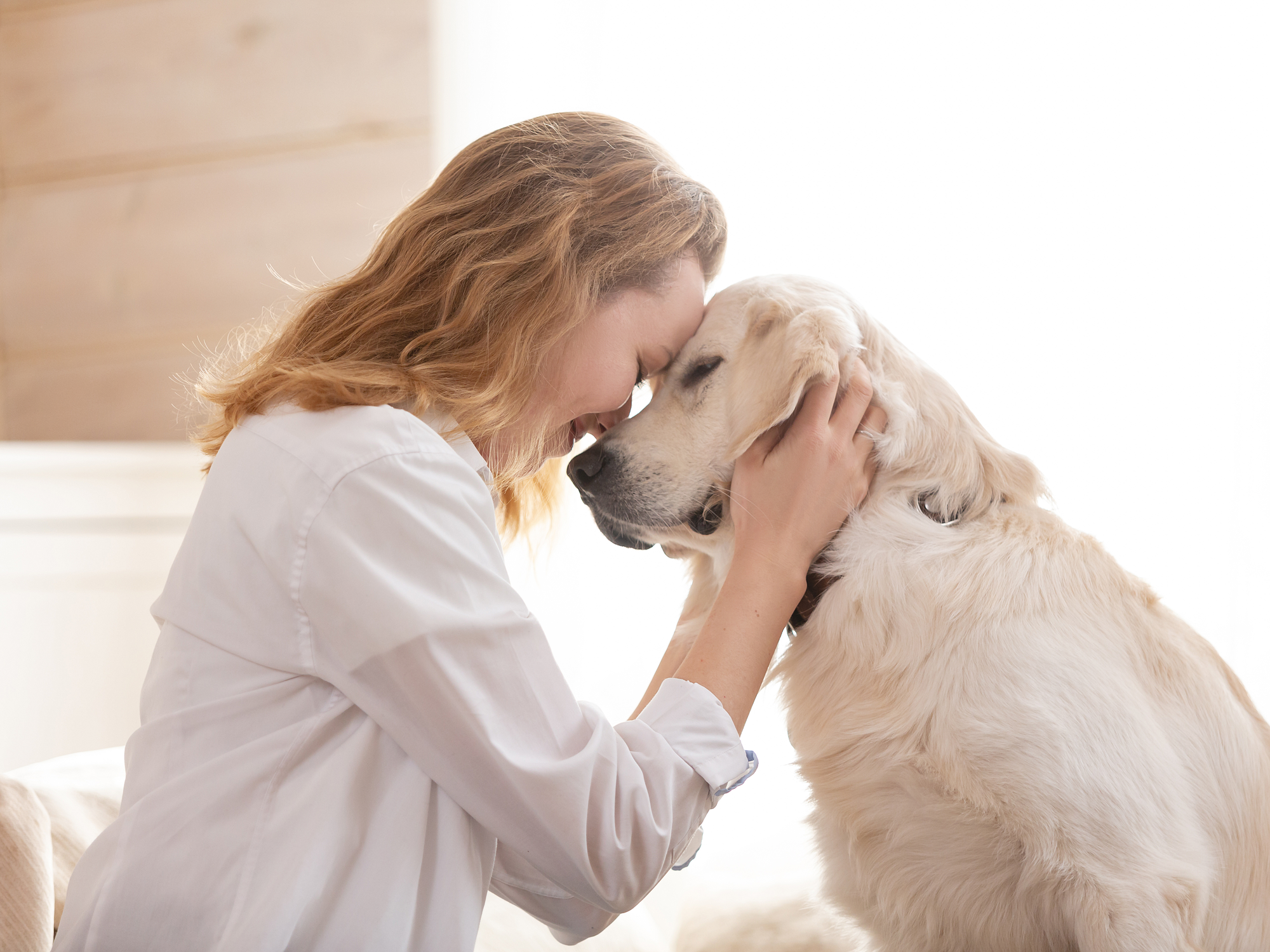 Senior pet care: How pet's needs change as they age