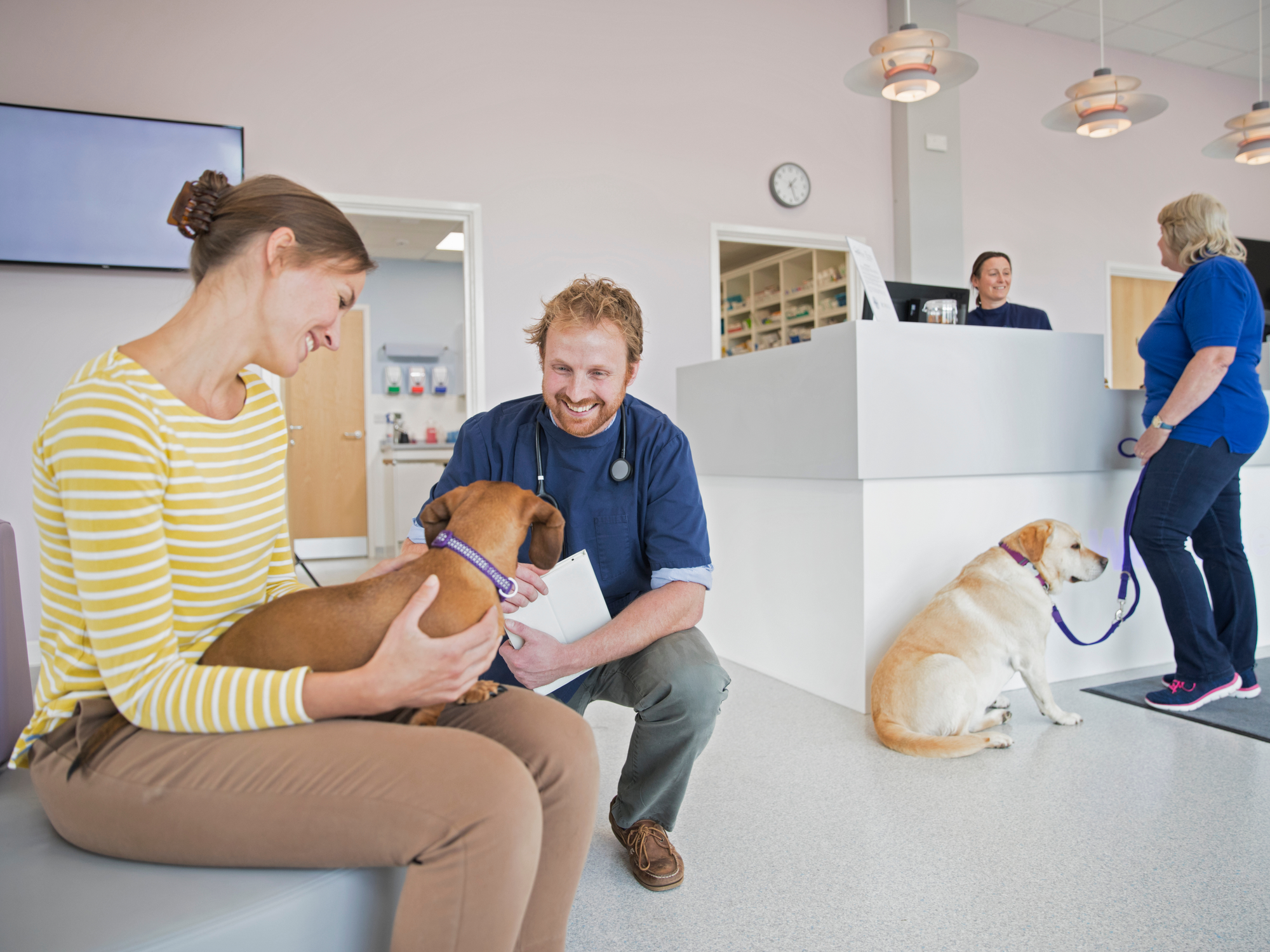 Signs You Should Take Your Pet to the Emergency Vet