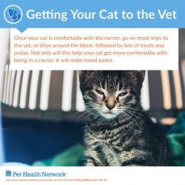 Ways to Help Reduce Pet Stress at the Vet