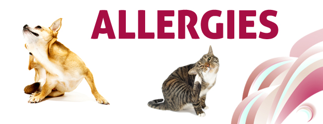 Itchy Pets? Let's Talk Pet Allergies