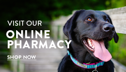 ONLINE PET PHARMACY & STORE