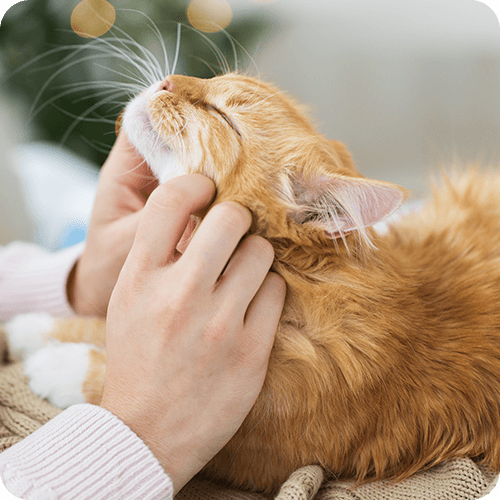 We care for pets with cancer