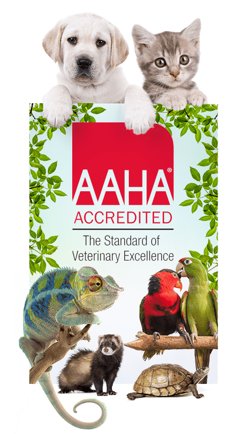 AAHA logo with pets