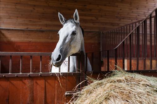 Equine: Dentistry
