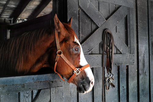 Equine: Lameness Evaluation