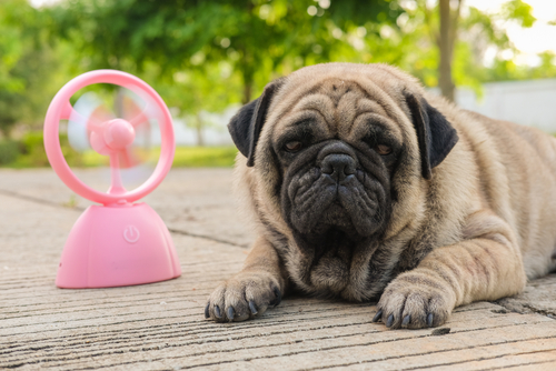 Heatstroke and Your Pet