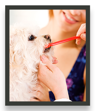 dental cleaning  for dogs