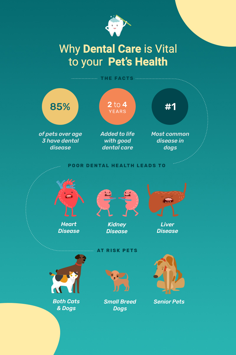 Why Dental Health is Important for Pets - Save 20% on Dental Cleanings