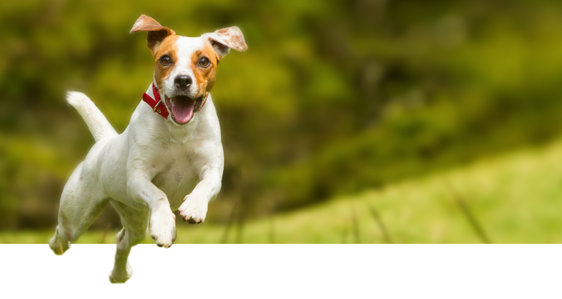 Protect Your Pet From Fleas Save On Seresto