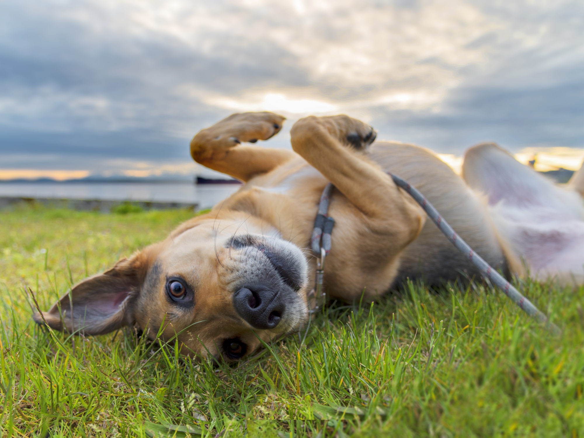 What infections can be caused by fleas and ticks?
