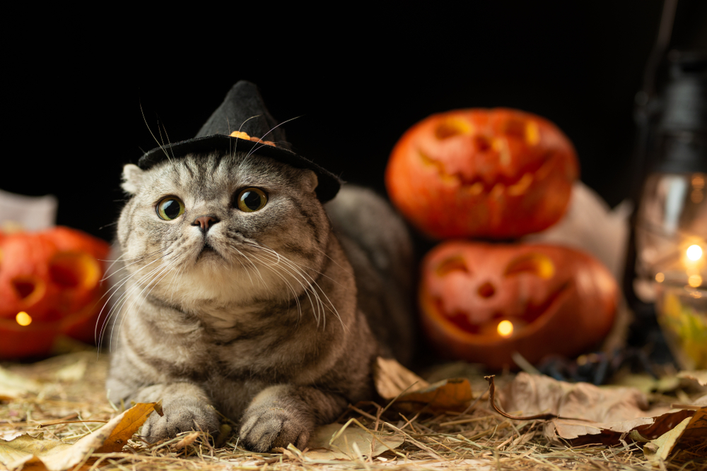 cat during halloween