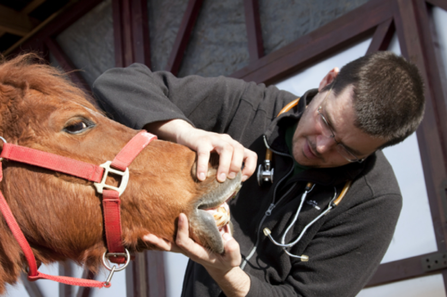 wellness exam for horses