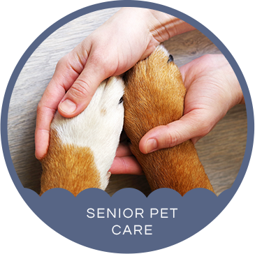 Senior Pet Care