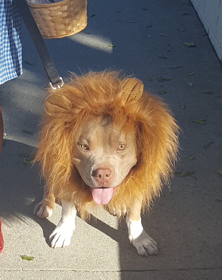 Lenny the Cowardly Lion