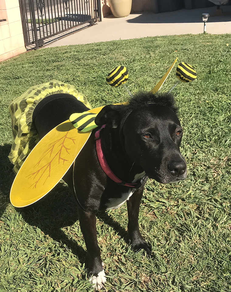 Queenue as a Honey Bee