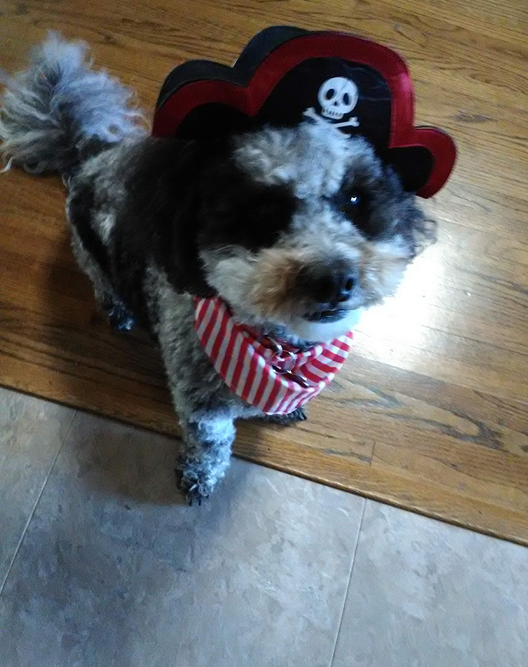 Teddy as a Pirate Captain