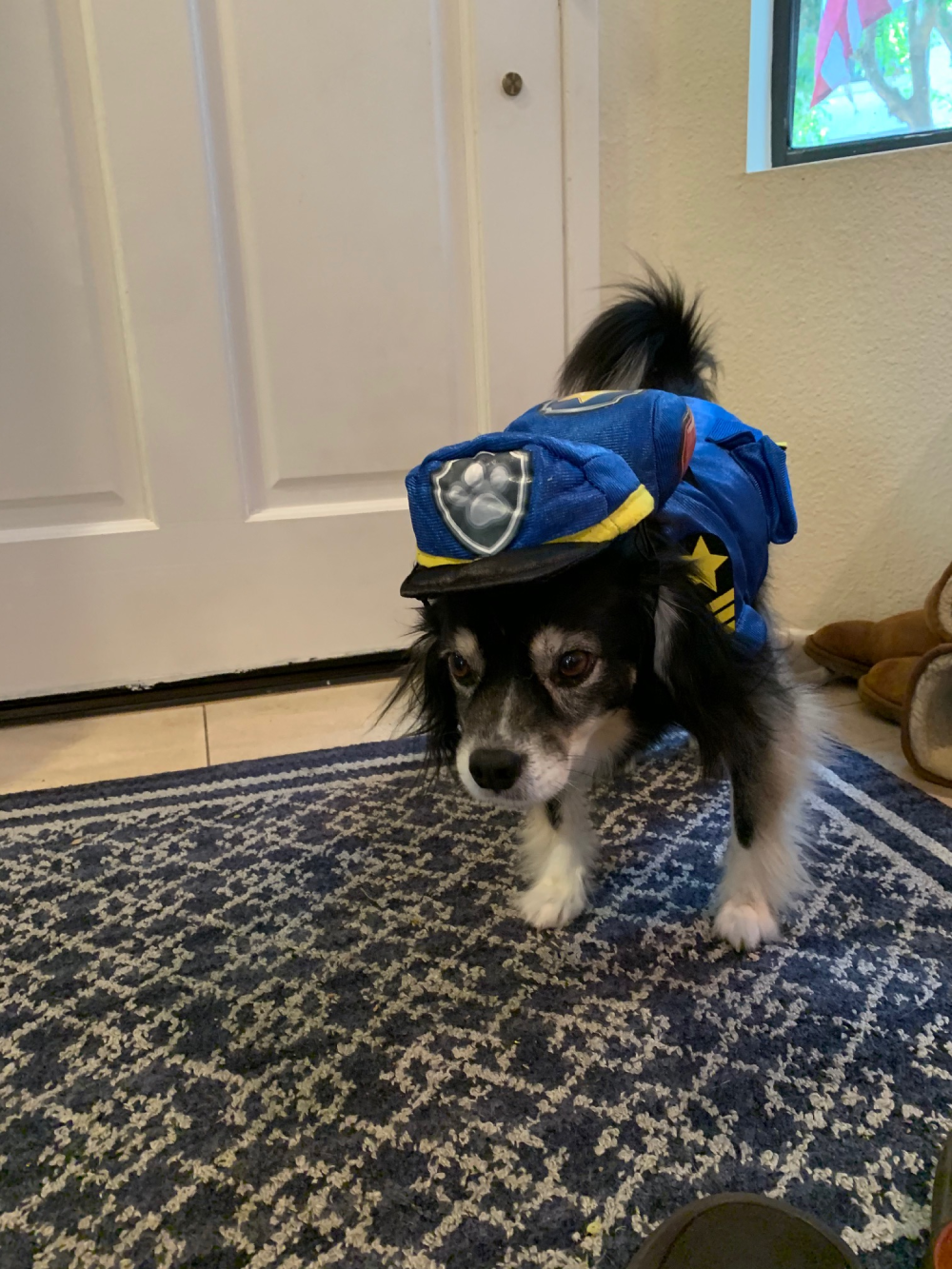 Jake as Chase from Paw Patrol