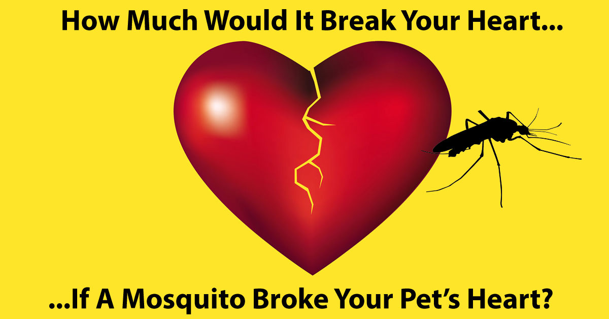Save Money While Saving Your Pet's Heart