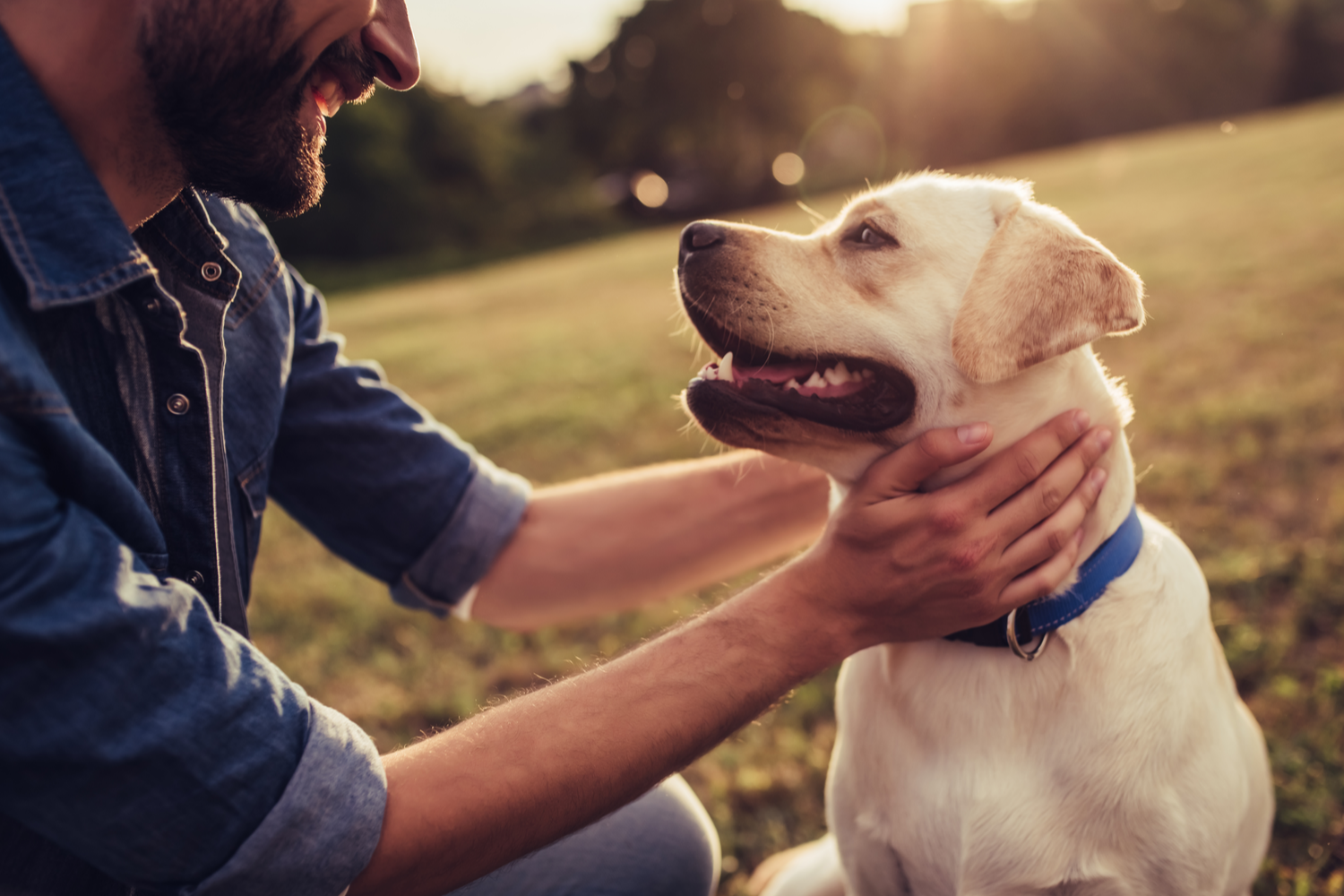 Why Your Pet May Need Neurosurgery?