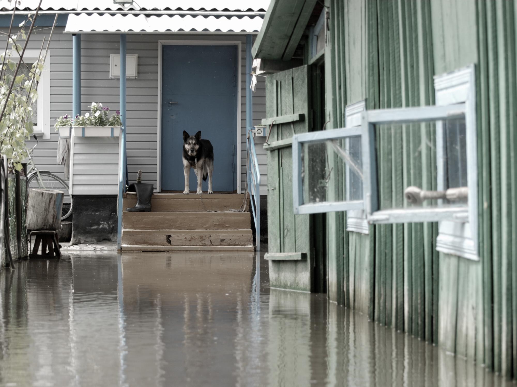 Prepare for Hurricane Season: Pet Plans
